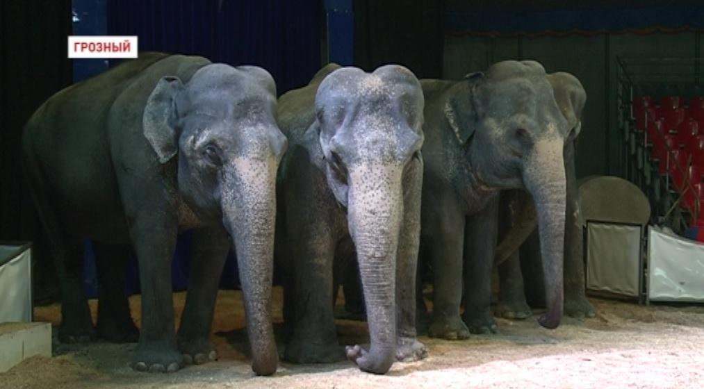 Международный цирк братьев Гертнер представил в Грозном  программу  «Шоу слонов»