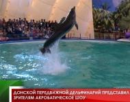 Донской передвижной дельфинарий представил зрителям акробатическое шоу