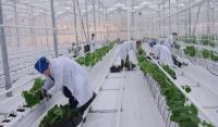 Аграрии Чечни собрали в 2019 году рекордный урожай овощей закрытого грунта