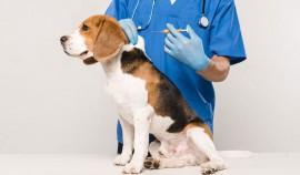 Стоимость вакцины от COVID-19 для животных уменьшена на 15%