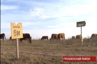 Саперы в Чечне подводят итоги за текущий год