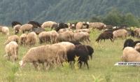 В высокогорном Беное развивается фермерство