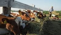 Фермеры ЧР получили  в 2019 году господдержку на сумму более 115 млн рублей