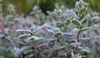 В Чечне местами ожидаются заморозки