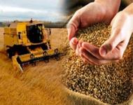 Аграрии ЧР планируют собрать свыше 250 тысяч тонн зерновых культур