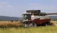 Аграрии Чеченской Республики планируют перевыполнить план по сбору зерновых