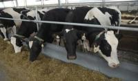 Поголовье крупного рогатого скота в Чеченской Республике выросло на 6,47%