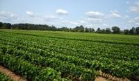 Аграрии ЧР и Сербии планируют создать в регионе питомник для выращивания саженцев