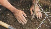 В Чеченской Республике создадут питомники для выращивания саженцев плодовых культур