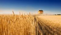 Чеченская Республика в числе регионов-лидеров по доведению господдержки до аграриев