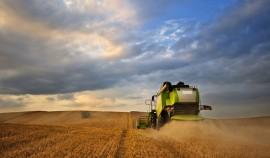 С 1 марта в России повысится экспортная пошлина на пшеницу