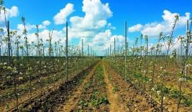 В текущем году в ЧР заложили 706 га садов при плане 300 га