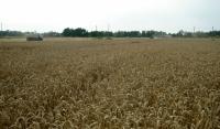 В Наурском и Шелковском районе увеличат площадь сельхозугодий