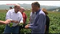 Американские агрономы осмотрели картофель