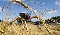 Камбин утвердил распределение 27 млрд рублей регионам на субсидии аграриям