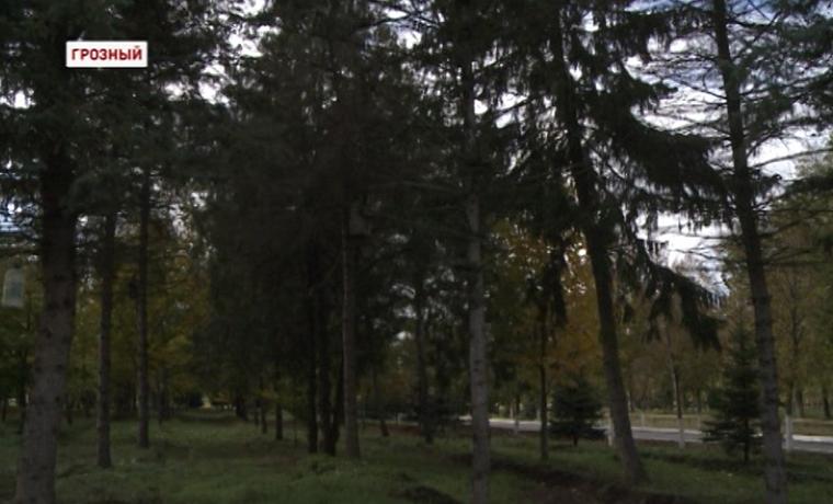 В Чечне активно реализуется программа лесовосстановления