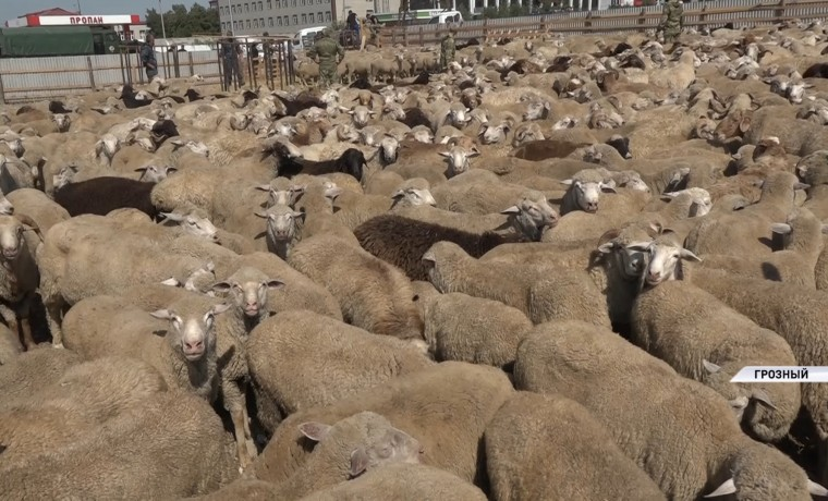 РОФ им. А-Х. Кадырова отправил жертвенных овец семьям погибших при исполнении сотрудников