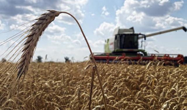 Фермеры Чеченской Республики побили свой рекорд по сбору зерна