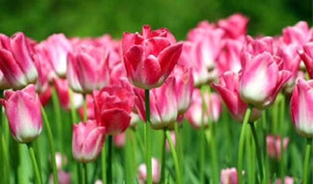 Волонтеры выложили «Спасибо» из цветов во дворе грозненских больниц, где лечат COVID-19