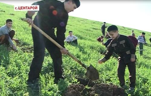 Воспитанники Центароевской школы хафизов высаживают саженцы